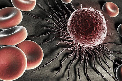 Stem Cells Poster by Science Picture Co
