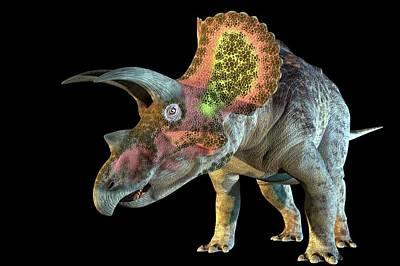 Triceratops Dinosaur Poster