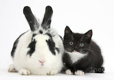 Kitten And Rabbit Poster by Mark Taylor