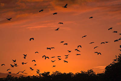Birds At Sunset Poster by Sally Weigand
