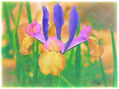 A Bearded Iris In My Vincent Van Gogh Garden Poster