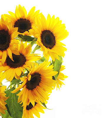 A Beautiful Sunflower Poster by Boon Mee