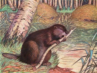A Beaver - Castor Fiber - A Beaver Poster