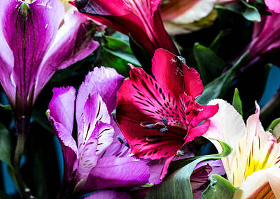 A Bouquet Of Peruvian Lilies Poster
