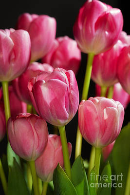 Poster featuring the photograph A Bouquet Of Pink Tulips by Nick  Biemans