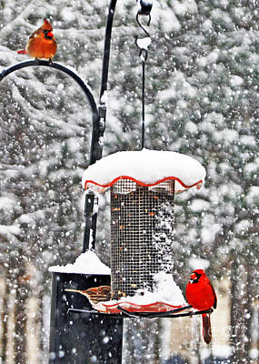 A Cardinal Winter Poster by Lydia Holly