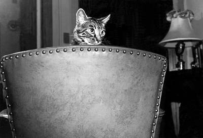 A Cat Peers Over A Chair Poster