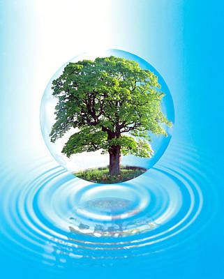 A Clear Sphere With A Full Tree Floats Poster