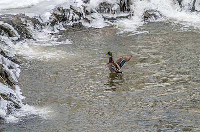 A Cold Bath Poster by Stroudwater Falls Photography