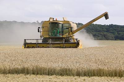 A Combine Harvester In Weybourne Poster by Ashley Cooper