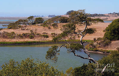 Poster featuring the photograph A Cove In Late Summer At Elkhorn Slough by Susan Wiedmann