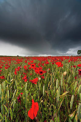 A Field Of Red Poppies Under A Dark Poster