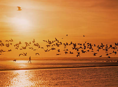 A Flock Of Birds Fly Over The Beach Poster