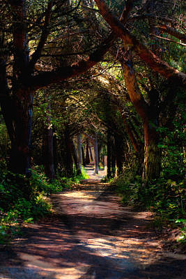 A Forest Path -dungeness Spit - Sequim Washington Poster
