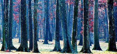 Poster featuring the photograph A Gathering Of Trees by Angela Davies