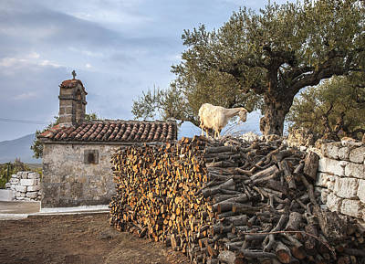 A Goat On The Woodpile Poster by Peter Eastland