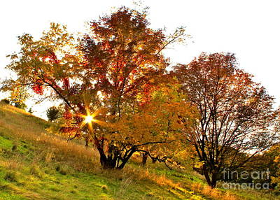 A Golden Glowing Autumn Sunset Poster by Jay Nodianos