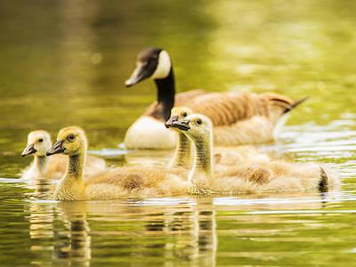 A Goosey Family Affair Poster by Bill Tiepelman