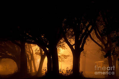 A Grove Of Trees Surrounded By Fog And Golden Light Poster