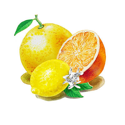 A Happy Citrus Bunch Grapefruit Lemon Orange Poster by Irina Sztukowski