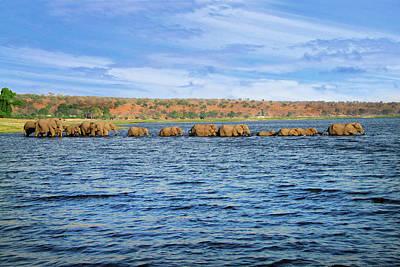 A Herd Of African Bush Elephants Poster