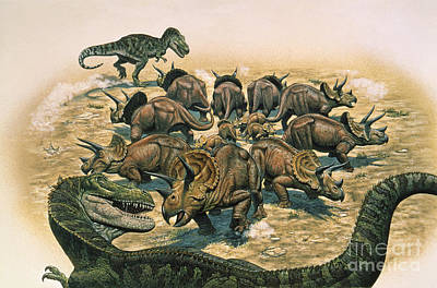 A Herd Of Triceratops Defend Poster