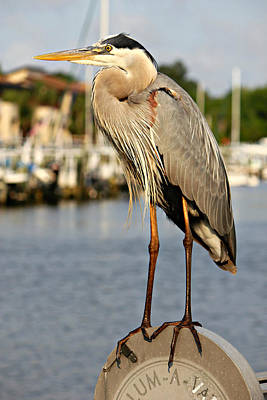 A Heron In The Marina Poster