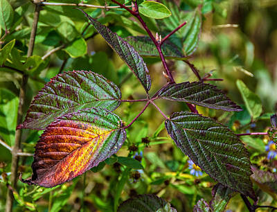A Hint Of Autumn Poster by Steve Harrington