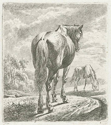A Horse Is Seen Obliquely From Behind, In The Background Poster
