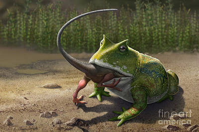 A Large Beelzebufo Frog Eating A Small Poster by Sergey Krasovskiy
