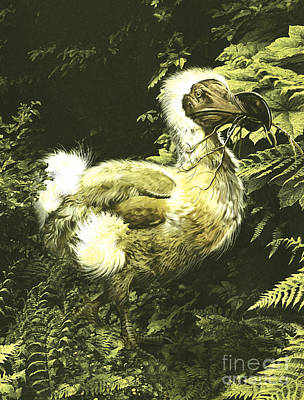 A Large Dodo Bird With Twig In Mouth Poster by Jan Sovak