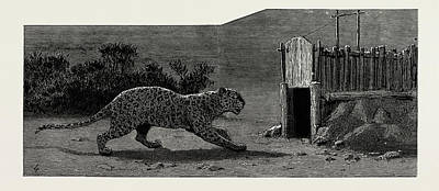 A Leopard Hunt In Upper Burma Poster by Litz Collection