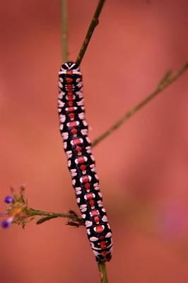 A Little Caterpillar Poster