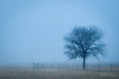 A Lone Tree In The Fog Poster by David Perry Lawrence