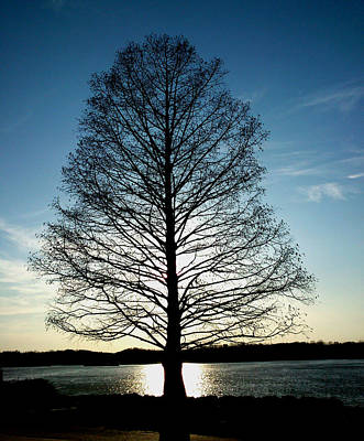 Poster featuring the photograph A Lonely Tree by Lucy D