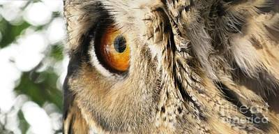 Poster featuring the photograph Bubo Bubo- Eurasian Eagle Owl. Close Up. by Ausra Huntington nee Paulauskaite