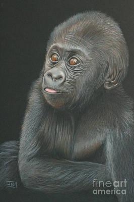 A Look Of Wonder - Baby Gorilla Poster