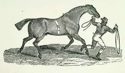 A Man And Horse Poster by British Library