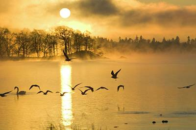 A Misty Dawn On Lake Windermere Poster by Ashley Cooper