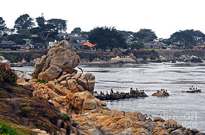 Poster featuring the photograph A Misty Day At Pacific Grove by Susan Wiedmann