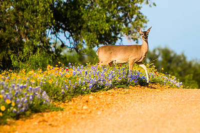 A Moment With A Wildflower Deer Poster by Ellie Teramoto