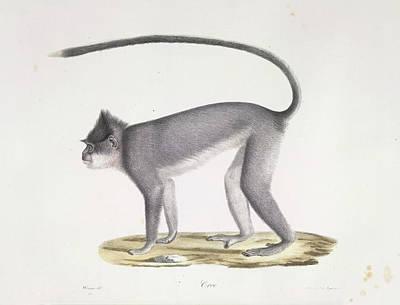 A Monkey Poster