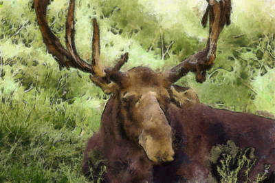 A Moose Abstract Poster by Ernie Echols