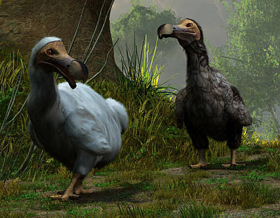 A Pair Of Dodos Poster by Daniel Eskridge