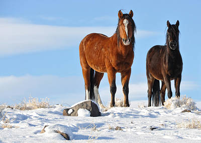 Poster featuring the photograph A Pair Of Wild Mustangs In Snow by Vinnie Oakes