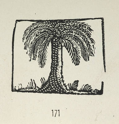 A Palm Tree Poster by British Library