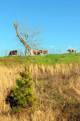 A Cow's Roadside View Poster by Jennifer Robin
