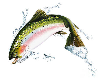 A Pink Salmon Jumping Out Of The Water Poster