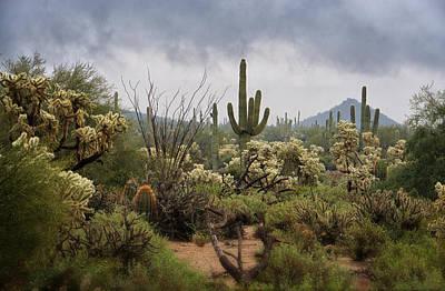 A Rainy Desert Day  Poster by Saija  Lehtonen