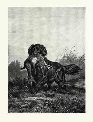 A Retriever. After Deiker. A Type Of Gun Dog That Retrieves Poster